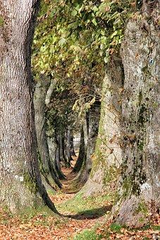 Nature, Tree, Wood, Bark