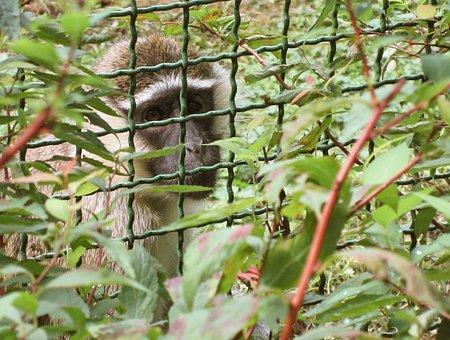 Monkey, Animal Rights, Animal, Law, Animals, Zoo, Sad