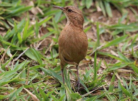 Bird, John Clay, On The Floor, Tropical Bird, Brazilian