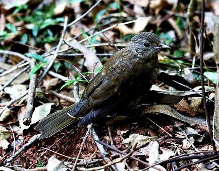 Bird, Tropical, On The Floor, Looking, Natural Habitat