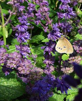 Art Garden, Spring, Purple, Close, Purple Flowers