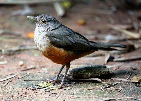 Creamy Orange, Bird, Tropical Bird, Colorful