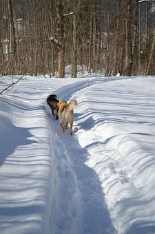 Dog, Winter, Dog In The Snow