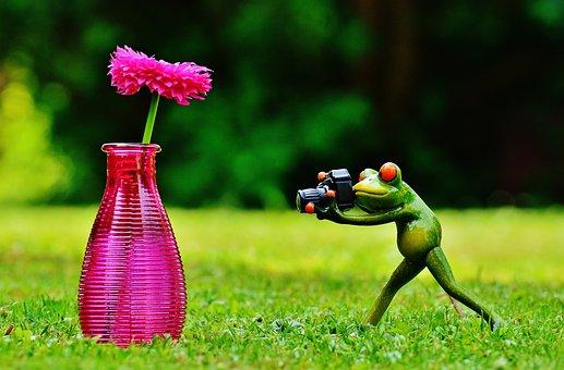 Vase, Flower, Frog, Photographer, Photograph, Funny