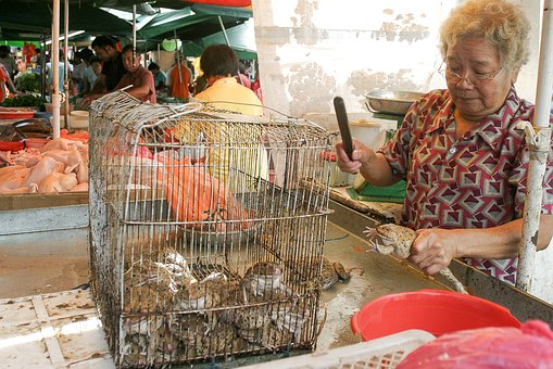 Frog, Market, Eating, Local, Cage, Food, Woman, Killing