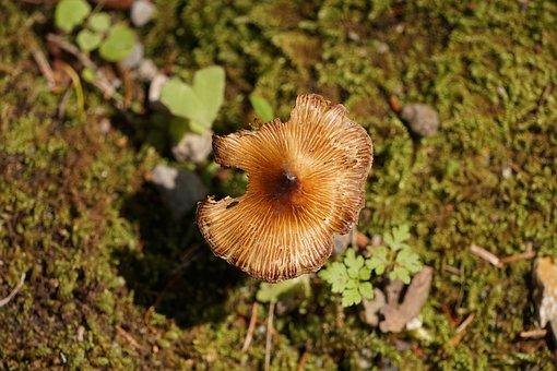 Mushroom, Bird's Eye View, Forest, Forest Floor, Moss