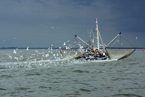 North Sea, Fishing Vessel, Gulls, Fishing Boat