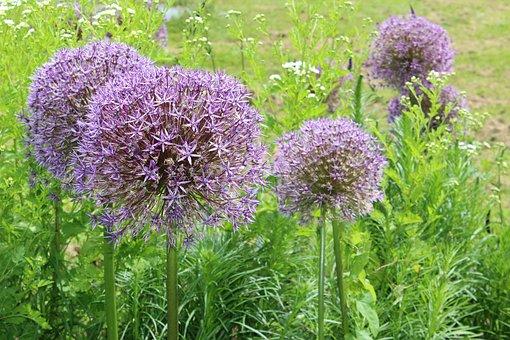 Blossom, Bloom, Shrub, Plant, Flower Garden