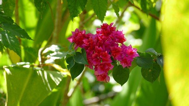 Nature, Plant, Flowers, Close, Bush, Green, Violet, Red