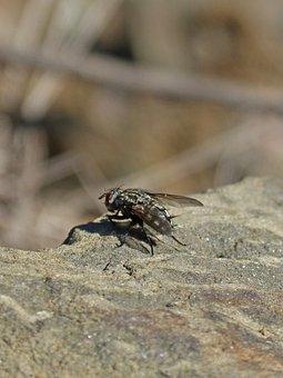 Botfly, Detail, Rock