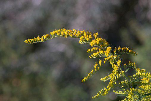 Yellow Flowers, Branch, Small Flowers, Shrubs, Colorful