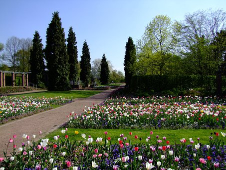 Flowers, Spring, Tulips, Flower Bed, South Park, Park