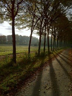 Avenue, October, Light, Sun, Shadow, Trees, Meadow