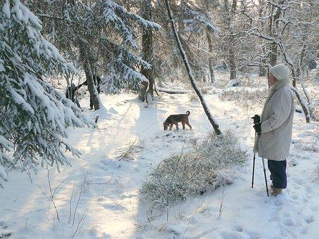 Winter, Winter Forest, Snow, Winter Dream, Snowy, Walk
