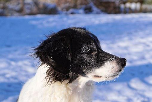 Dog, Snow, Portrait, Winter, Animal, Dog In The Snow