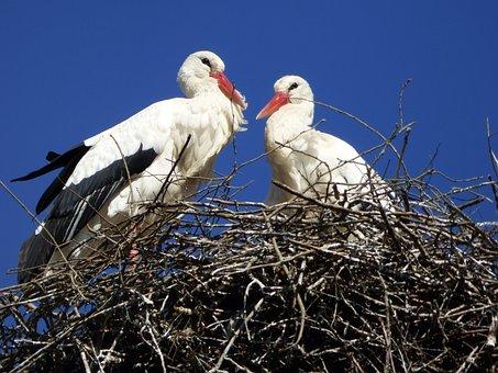 Stork, Alsace, France, Bird, Nature, Fauna, Nest