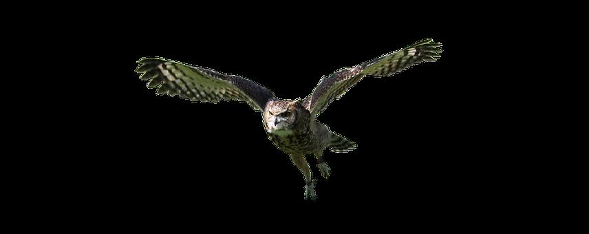 Owl, Flying, Bird, Animal, Nature, Wildlife, Predator