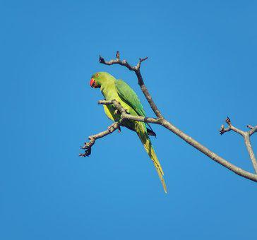 Wildlife, Bird, Animal, Wild, Tropical, Nature, Parrot