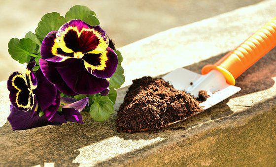 Plant, Pansy, Garden, Earth, Blade, Plant Flowers