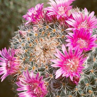 Plant, Flower, Nature, Cactus, Flower's, Bloom