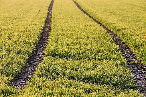 Arable, Traces, Cereals, Field, Landscape, Agriculture