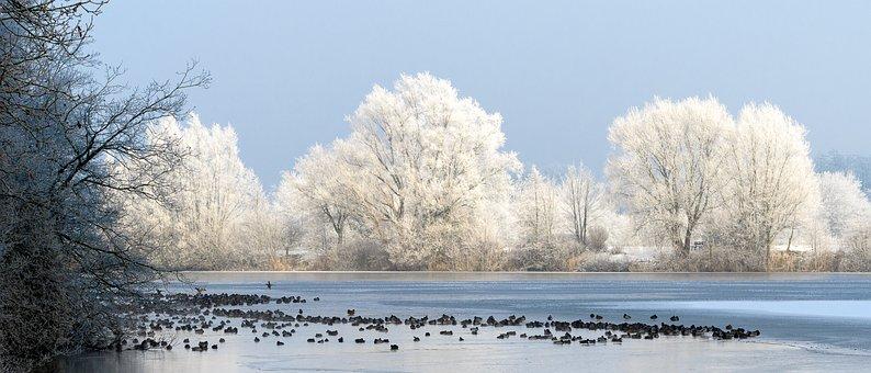 Winter, Snow, Frost, Cold, Frozen, Landscape, Frosty