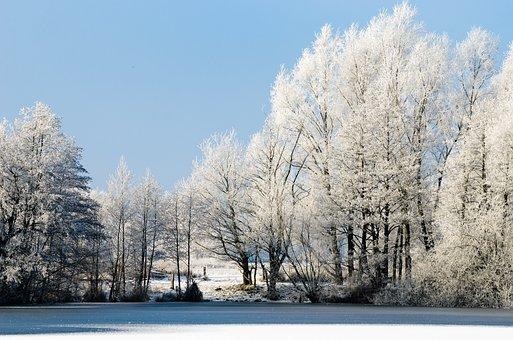 Frost, Snow, Winter, Tree, Frozen, Cold, Landscape