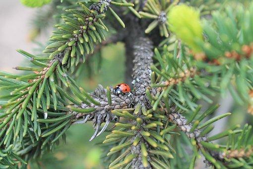 Tree, Needle, Branch, Evergreen, Nature, Pine, Closeup