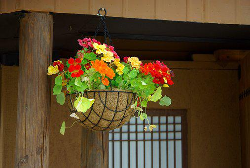 Wood, Flowers, Home, Potted Plant, Homes For Sale