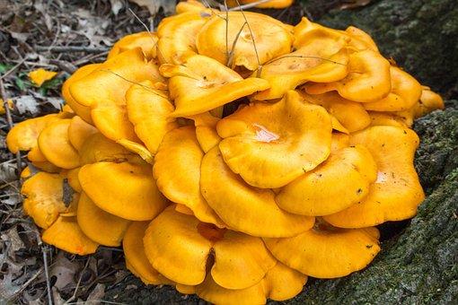 Fungus, Fall, Mushroom, Food, Wood