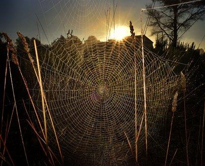 Spiderweb, Spider, Trap, Intricacy, Cobweb, Nature