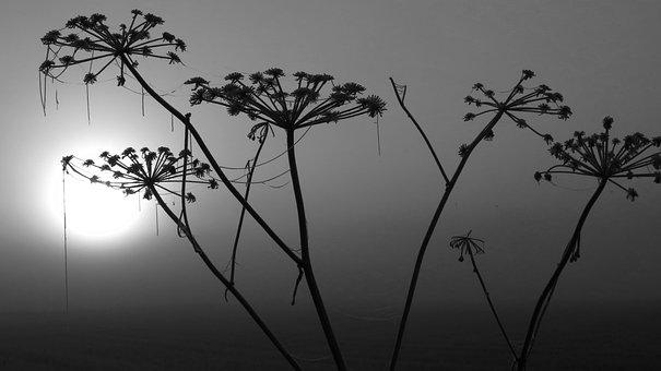 Nature, Plant, Winter Törröttäjä, Sun