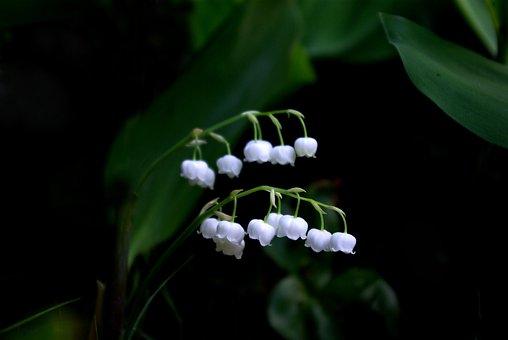 Nature, Plants, Leaf, Flowers, Outdoors