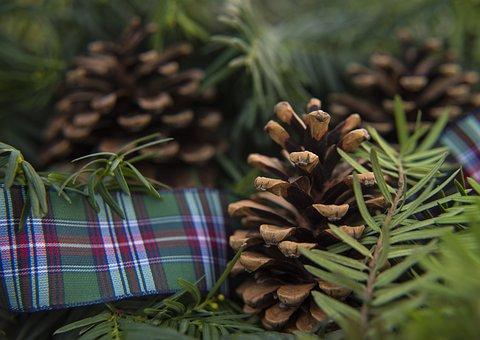 Pine, Winter, Cone, Christmas, Evergreen, Season