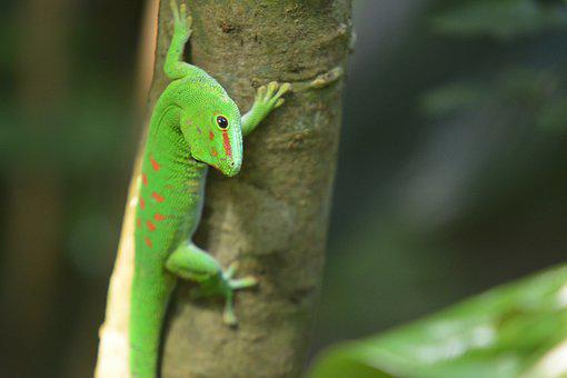 Animal World, Reptile, Lizard, Nature, Animal, Tree