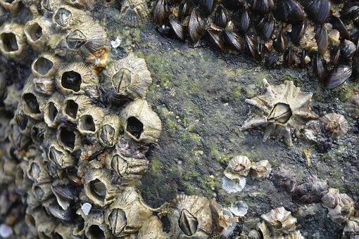 Seashell, Seashore, Stone, Nature, Desktop, Pattern