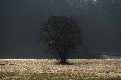 Tree, Fog, Dawn, Back Light, Meadow, Wet, Landscape