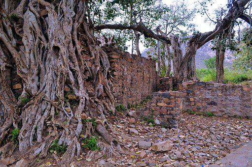 Nature, Tree, Old, Wood, Travel, Gnarly, Trunk