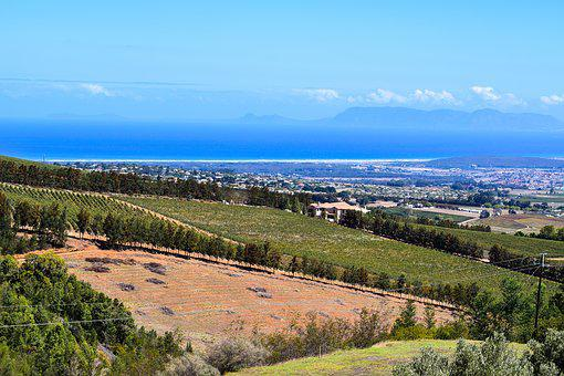 South Africa, Vineyard, Table Mountain, Panoramic