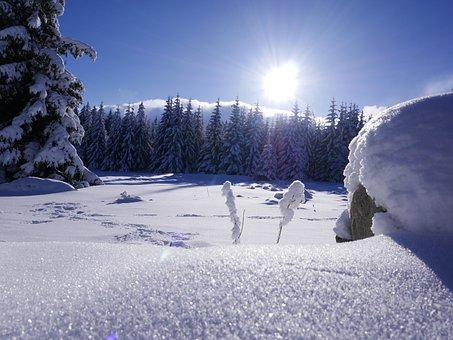 Snow, Winter, Cold, Frozen, Season, Frost, Ice