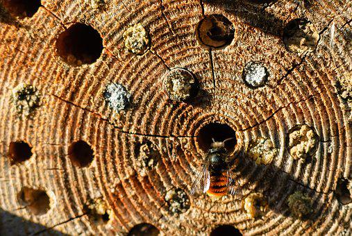 Insect, Stripe, Wood, Bee, Hole, Nature, Wild
