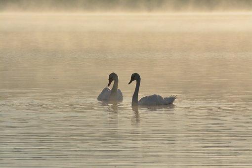 Body Of Water, Birds, Lake, No Person, Sea, Coastal