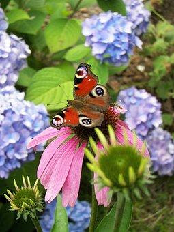 Nature, Flower, Plant, Summer, Garden, Butterfly, Close