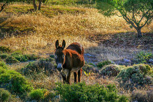 Nature, Animals, Karg, Eat, Grass, Field, Dry, Donkey