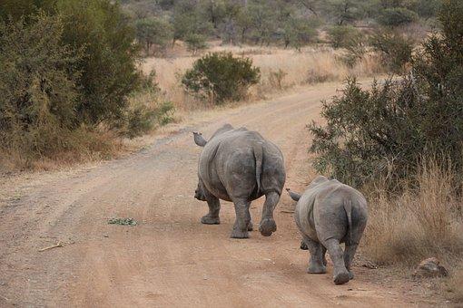 Elephant, Wildlife, Mammal, Travel, Safari, Animal