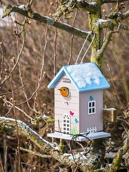Bird Feeder, Robin, Feed, Nest, Live, Home, Security