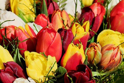 Bouquet, Tulip Bouquet, Flowers, Colorful, Tulipa