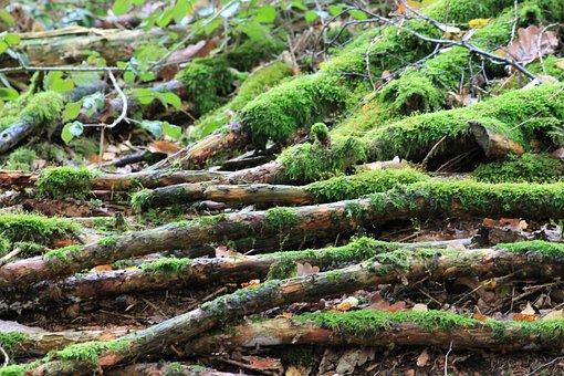 Nature, Tree, Moss, Wood, Plant, Leaf, Landscape
