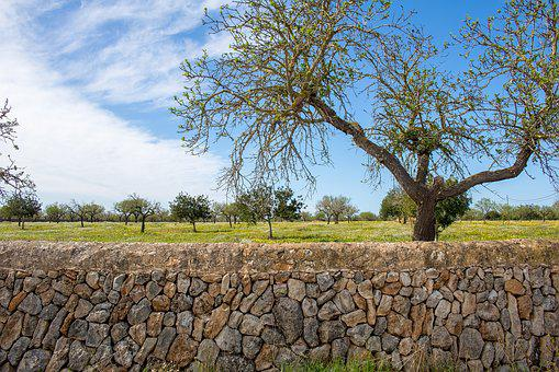 Mallorca, Landscape, Llucmajor, Balearic Islands