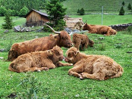 Mammal, Grass, Animal, Meadow, Farm, Cattle, Nature